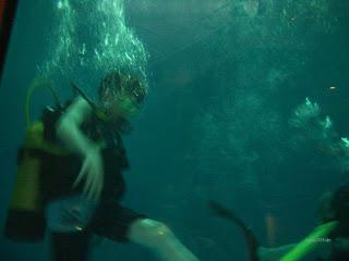 scuba diving 03/2005